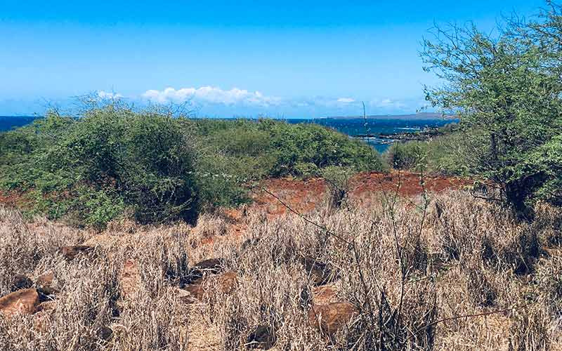4260 Pohakuloa Road, Maunaloa, Hawaii 96770, ,Land,For Sale,Pohakuloa Road,1034